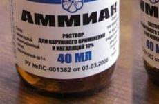 Отруєння аміаком – симптоми, перша допомога при інтоксикації газом та вплив аміаку на організм людини