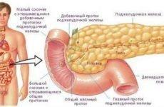 Панкреонекроз підшлункової залози: симптоми деструктивного панкреатиту, що це таке