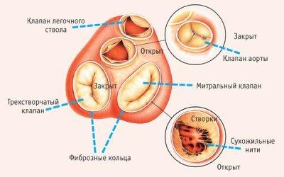 Хвороби клапанів серця: симптоми, будова і функції