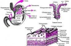 Гастрит з підвищеною кислотністю шлунка: схеми лікування, симптоми і ознаки