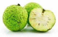 Адамове яблуко: застосування в народній медицині, способи лікування суглобів, відгуки, рецепти приготування
