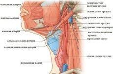 Атеросклероз судин шиї: діагностика і терапія уражень магістральних артерій