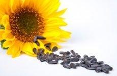 Лікування гіпертонії насінням соняшника і кропу