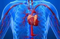 Аневризма висхідного відділу аорти: причини, симптоми та особливості лікування