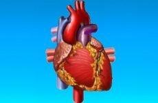 Помилкова додаткова хорда лівого шлуночка серця у дітей та дорослих