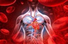 Як проводиться очищення крові народними засобами