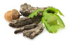 Кора дуба для ясен: лікувальні властивості і приготування відвару
