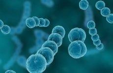 Як лікувати стрептококову і стафілококову ангіну?