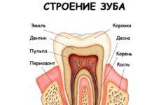 Будова зубів людини: схема розташування і анатомічні особливості