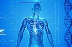 Лецитин незамінний компонент здорового організму