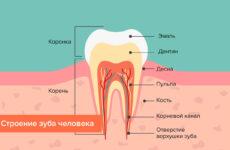 Скільки каналів знаходиться в нижніх і верхніх зубах, від чого залежить їх кількість