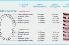 Скільки молочних зубів має бути у дітей: кількість і терміни появи