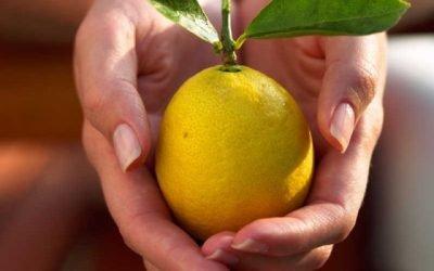Лимон підвищує або знижує тиск і як зробити з нього ліки?