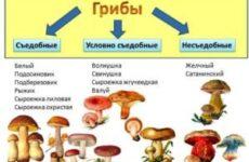 Що робити при отруєнні грибами (перша допомога): через скільки проявляється отруєння і які наслідки отруєння