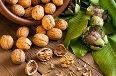 Волоський горіх: користь і шкода для здоров'я