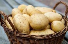 Можна їсти сиру картоплю без шкоди для здоров'я