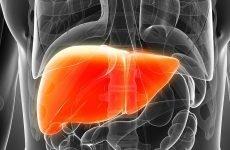 Чищення печінки і нирок: коли і як потрібно це робити