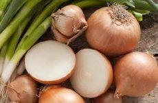 Цибуля при виразці шлунка: можна їсти і в якому вигляді