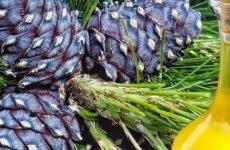Кедрове масло для шлунка: як використовується, чим корисно