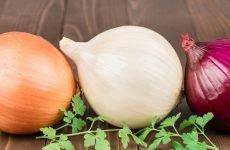 Можна їсти цибулю при гастриті: користь овоча, склад