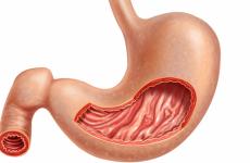 Залози шлунка: функції, види, від чого залежить робота
