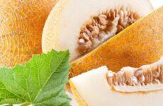 Диня при гастритах: чи можна їсти, корисність