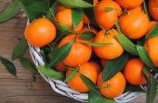 Які вітаміни присутні у мандаринах