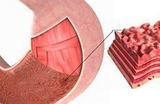 Ерозія або виразка шлунка: лікування, чим відрізняється, симптоми
