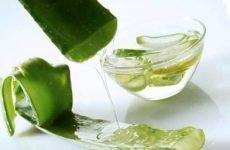 Як приготувати алое з медом для лікування виразки шлунка?