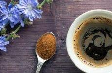 Цикорій при гастриті: як готувати, протипоказання