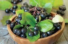 Чорноплідна горобина: шкода і користь для організму