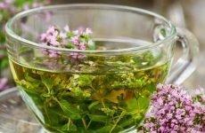 Чебрець для шлунка: рецепти, коли протипоказано