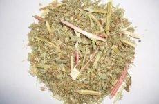 Використовуємо трави для лікування виразки шлунка: вибір і рецепти