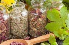Трави при болях у шлунку: ефективні засоби, користь