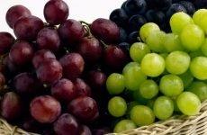 Виноград: чи можна при гастриті, корисні властивості