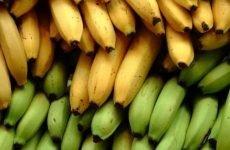 Можна їсти банани при виразці шлунка: властивості