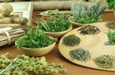 Трави для очищення нирок: показання, дія, ефективність