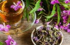 Іван-чай для шлунка: як заварювати, обмеження