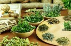 Які трави можна пити при гастриті шлунка і чи допоможуть вони?