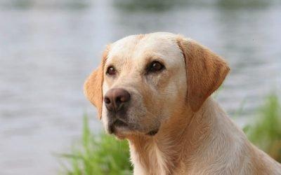 Чорний пронос у собаки: причини і лікування