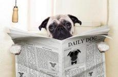Що дати собаці від проносу: якісь таблетки?