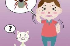 Що робити, якщо дитину вкусив кліщ? Як правильно витягти кліща з місця укусу