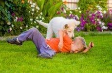 Що робити, якщо дитину вкусила собака? Перша допомога і лікування укусу