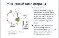 Цикл розвитку гострики в організмі людини
