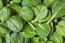 Користь шпинату для жінок: вплив на організм, показання