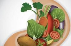 Як швидко переварити їжу в шлунку людини?