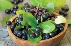 Чим корисна чорноплідна горобина для здоров'я людини