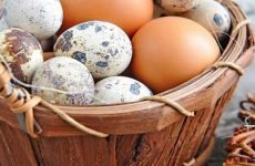 Яйця при гастриті: можна чи є користь, рецепти