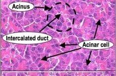 Дифузні зміни паренхіми підшлункової залози: що це таке, ознаки, як лікувати