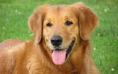 Пронос (діарея) у собаки: що робити?